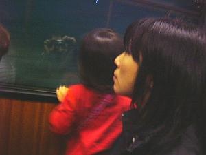 hk_tram.jpg