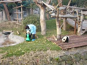 panda_s2.jpg