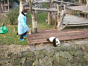 panda_s3.jpg