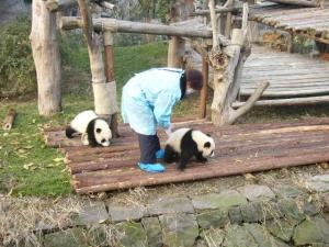 panda_s4.jpg