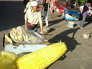 umc_park_corn.jpg