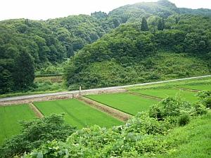 sichibei_green.jpg
